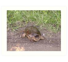 Rare Alligator Snapping Turtle Art Print