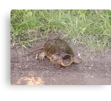 Rare Alligator Snapping Turtle Metal Print