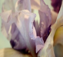 Pale Lilac Iris Abstract by taiche