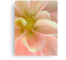 Dahlia in Soft Pink Canvas Print
