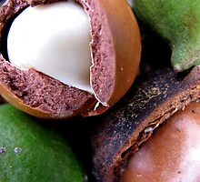 macadamia by betty porteus