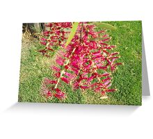 Red & Green  Greeting Card