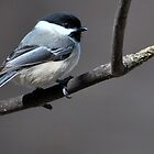 Chickadee by Robert Goulet