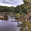 The Bidgee # 2 by GailD
