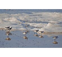 Sanderlings and Surf Photographic Print