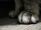 The night creeps on little cat feet by abbycat