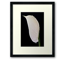 Peace Lily (spathipyllum) Framed Print
