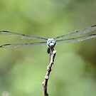 Dragonfly by Jeff Ore