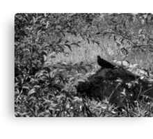 Restful Solitude Canvas Print