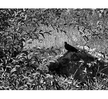 Restful Solitude Photographic Print