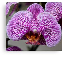 Sad Orchid Canvas Print