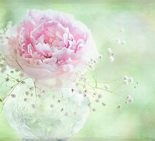 Soft on Peonies by Jacky Parker