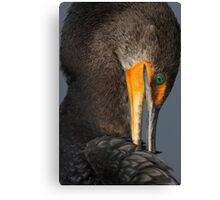 Shy Cormorant Canvas Print