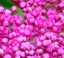 Slice of Pink Dots 1 by Little MissPip