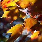 Autumn by DragonInk7
