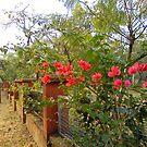 Boganwel Original Photograph by Anil Nene