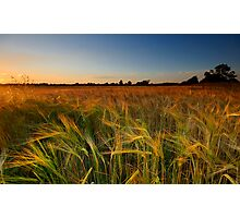 Of Summer Nights and Barley Fields... Photographic Print