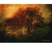 Toward a secret sky ... Photographic Print