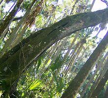 Everglades  by knottynikki