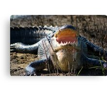 Hungry Harry Canvas Print