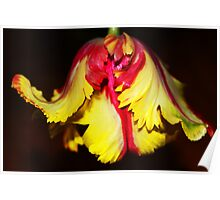 Flaming Parrot Tulip Poster