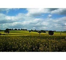 Yellow Essex  Photographic Print