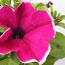 Petunia & exposure by shortarcasart