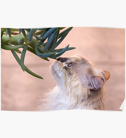 Stop and smell.. the succulent? Poster