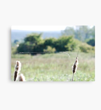 Clever Spider Canvas Print