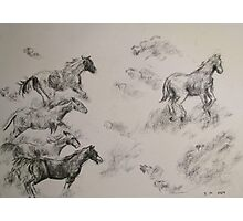 Horses running Free Photographic Print