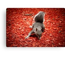 Squirrel in the mews Canvas Print