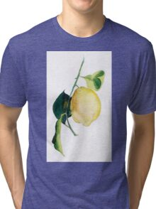 Branch of  lemons with leaves Tri-blend T-Shirt