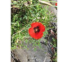 Springtime Poppy! Photographic Print