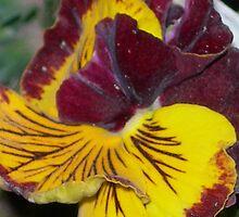 Flower 2 by Declan Kane