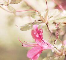 Peeking azaleas by alyphoto