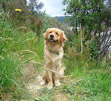 Mans Best Friend by Beverley  Johnston