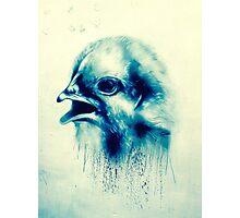 Bird on a london wall Photographic Print