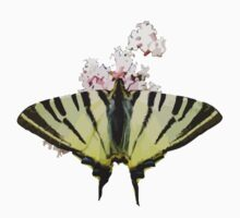 Scarce Swallowtail On Wild Garlic Flowers Vector Isolated Kids Clothes