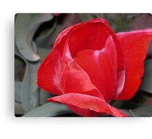 Tulip 24 Canvas Print