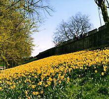 Yellow Carpet in York by Ian Ker