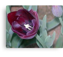 Tulip 30 Metal Print