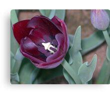 Tulip 30 Canvas Print