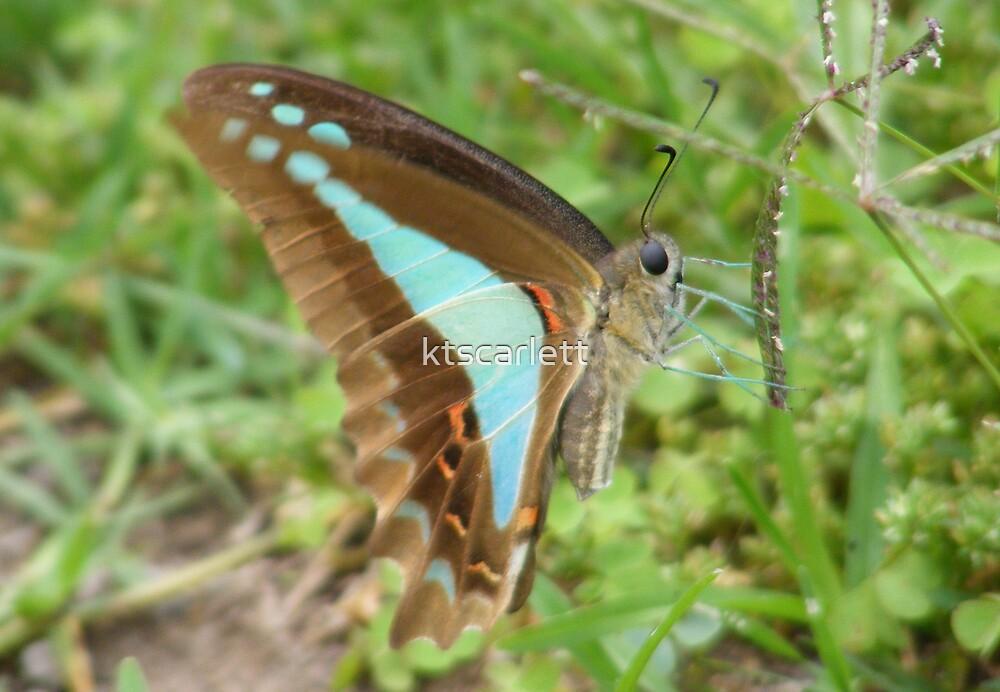 Butterfly by ktscarlett