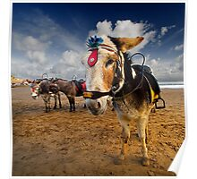 Patch - Beach Donkey Poster