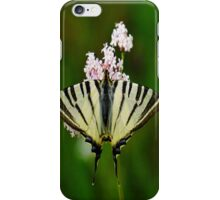 Scarce Swallowtail On Wild Garlic Flowers iPhone Case/Skin