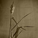 Long Grass  by Christine  Wilson Photography