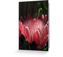 Native Protea Greeting Card