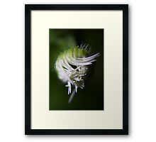 logical chaos (from wild flowers collection) Framed Print