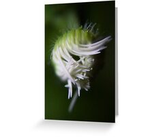 logical chaos (from wild flowers collection) Greeting Card