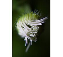 logical chaos (from wild flowers collection) Photographic Print